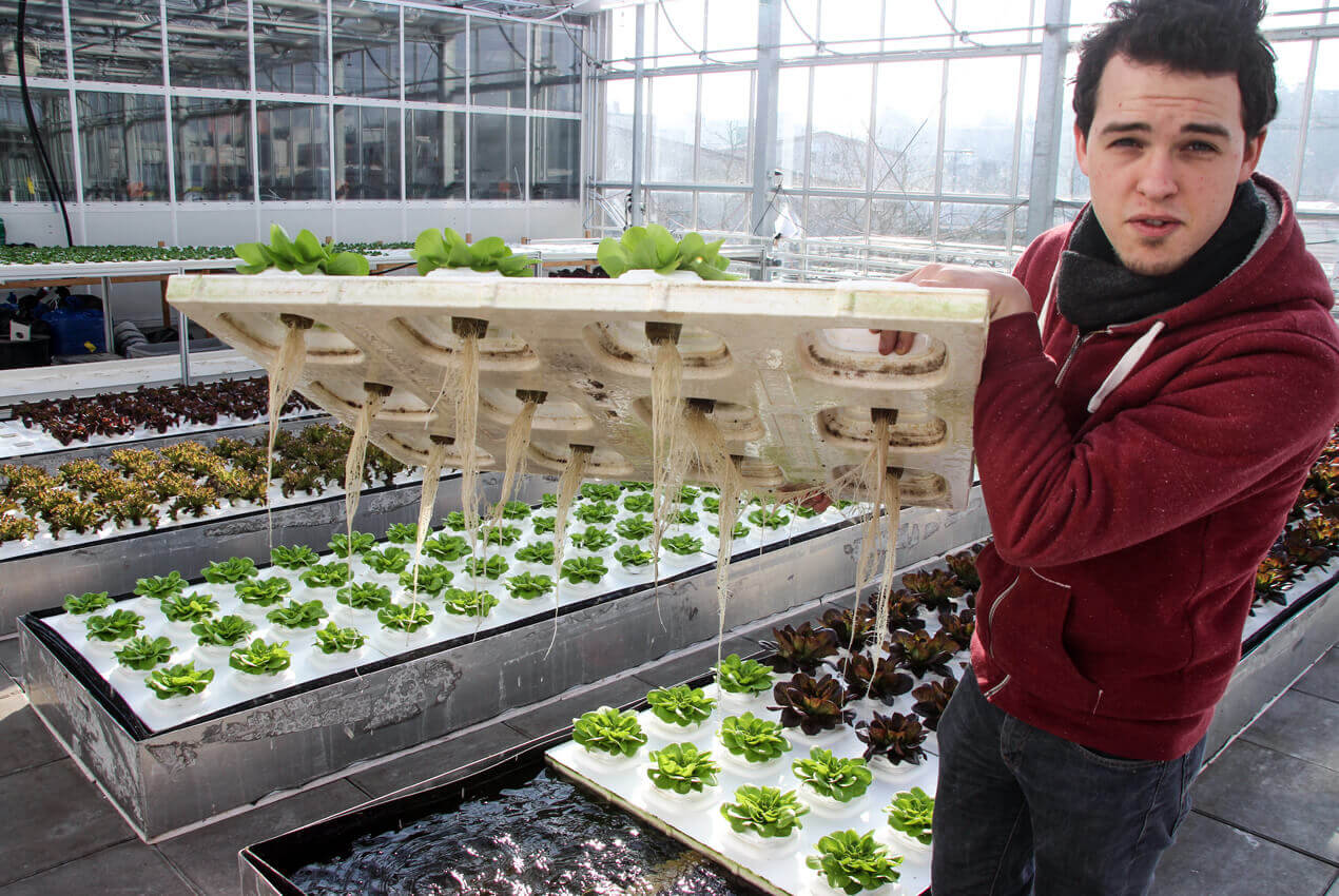 Urban Farmers, Vertical Farming, Studio Duel